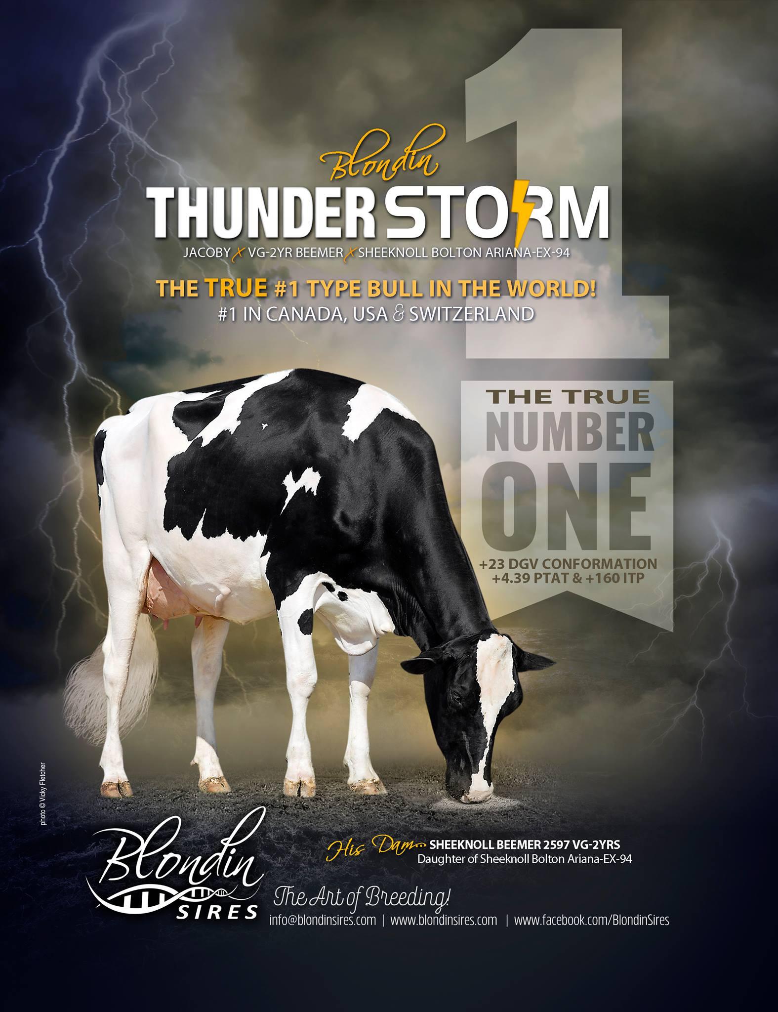 El toro #1 en tipo del mundo ya está aquí! THUNDER STORM