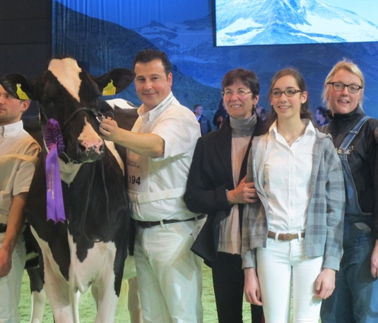Cow shows and clipping schools