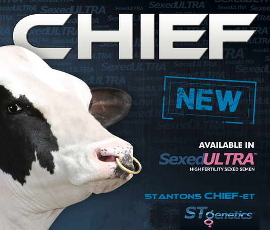 CHIEF, nuevo, sexado y disponible!